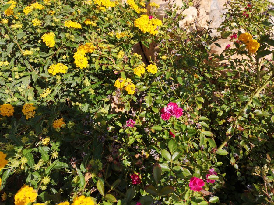 Fleurs en sang et or
