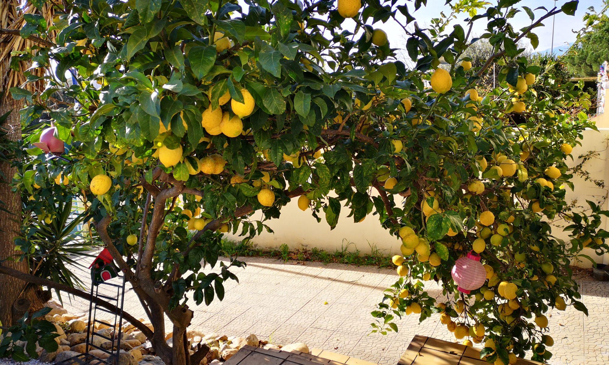 cascade de citrons